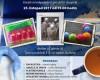 23.11.17 – CDS Tamtam – Adventní tvoření s neslyšícími dětmi