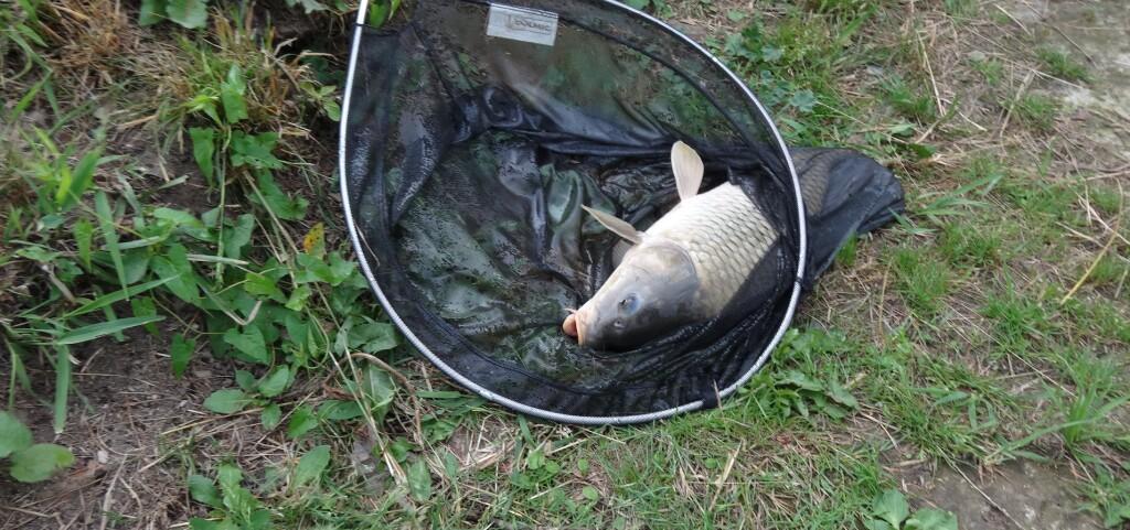 Ryba v síti